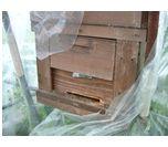 静かなミツバチの巣