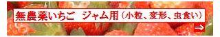 古賀農園 佐賀県産 無農薬栽培苺 ジャム用(小粒、変形、虫食い等)