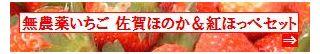 古賀農園 佐賀県産 無農薬栽培苺 佐賀ほのか&紅ほっぺセット