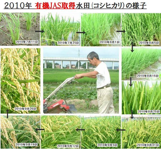 古賀農園2010年有機JAS取得田んぼの様子
