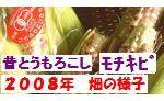 2008年 古賀農園有機無農薬栽培 もちきび(もちトウモロコシ)の成長の様子