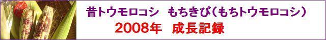 古賀農園 有機無農薬栽培もちきび(もちトウモロコシ)2008年成長記録