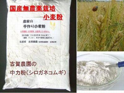 古賀農園 国産無農薬栽培小麦中力粉 シロガネコムギ