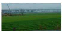 春の暖かい雨に煙る麦畑