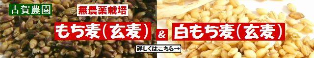 古賀農園 国産(佐賀県産)無農薬栽培紫もち麦(玄麦)と白もち麦(玄麦)
