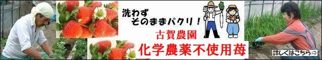 古賀農園 無農薬栽培いちご